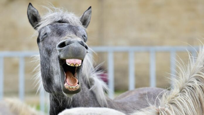 Internet Vigilantes Are Fighting Ivermectin Misinformation With Memes And Explicit Horse Cartoons